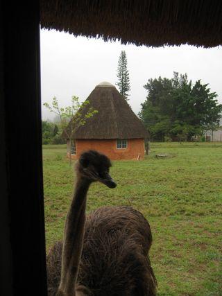 Lindsays Africa pics 214