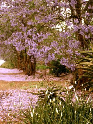 Lindsays Africa pics 229_2