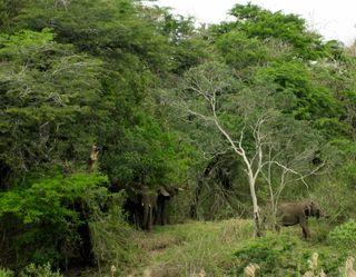 Lindsays Africa pics 337_2