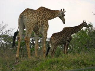 Lindsays Africa pics 346