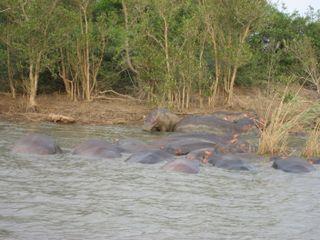 Lindsays Africa pics 281