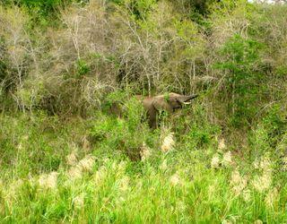 Lindsays Africa pics 332